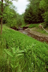A gentle stream just to the south of the Finger Lakes area of New York.